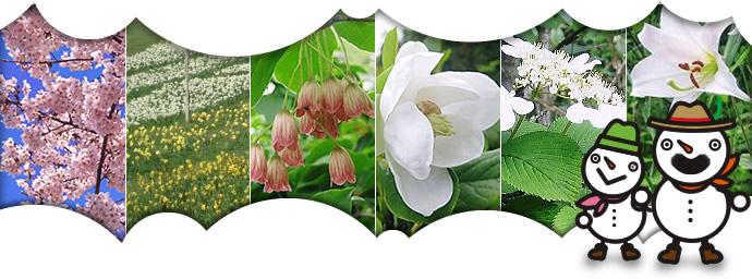 恐羅漢の花